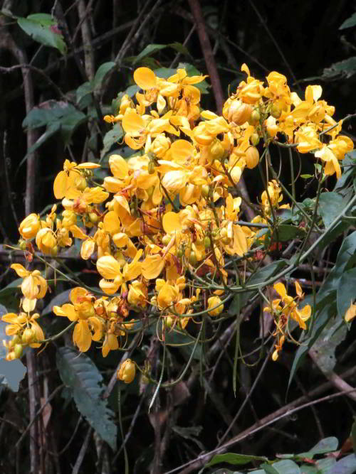 Yellow flowers of plants in the amazon rainforest