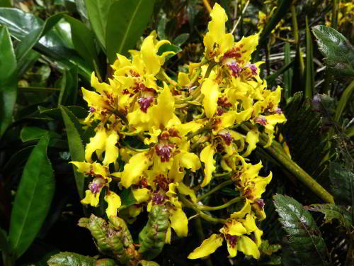 Green orchids are common in the tropical rainforest
