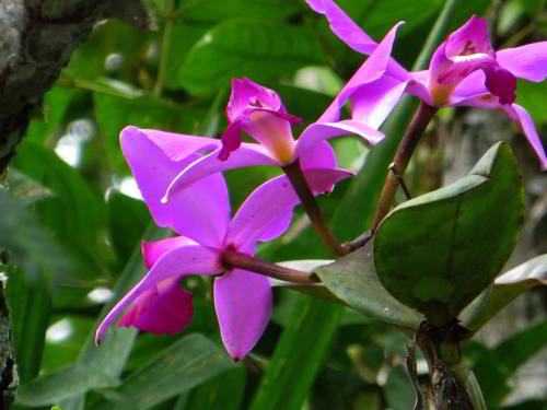 Bright orchid in the tropical jungle