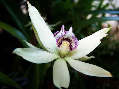 White and Purple Orchid in he jungle