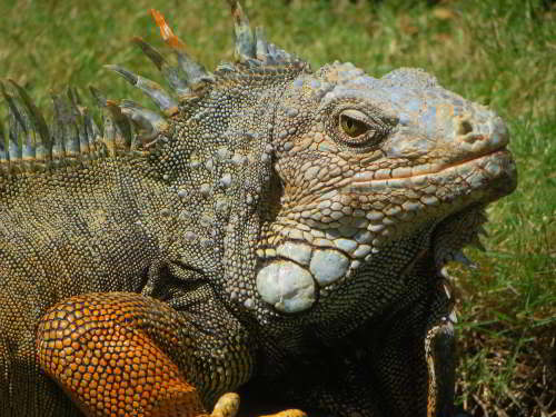 THINGS TO DO IN GUAYAQUIL, ECUADOR: Parque Iguana Park Catedral